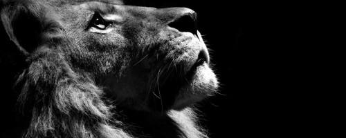 LionNatGeo